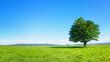 Leinwanddruck Bild - lonely tree against clear blue sky