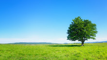 Lonely Tree Against Clear Blue Sky