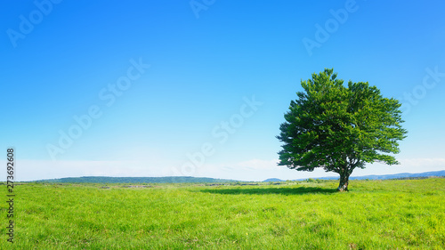 Poster Montagne lonely tree against clear blue sky