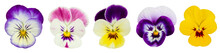 Set Of Pansies Isolated On Whi...