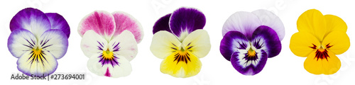 Tuinposter Pansies Set of pansies isolated on white background.