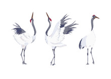 Set Of Cranes. Vector Illustration. Watercolor Style