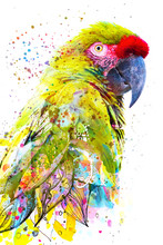 Paintography. Double Exposure Photograph Of A Tropical Parrot Combined With Colorful Hand Drawn Painting