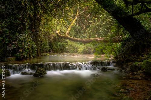 Fototapety, obrazy: albero caduto su corso d'acqua