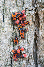 Group Of Adult Insects And Lar...