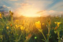 Wild Flowers At Morning On Sun...