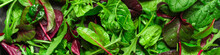Healthy Salad, Leaves Mix Sala...