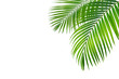 Green leaf of palm tree on blue background