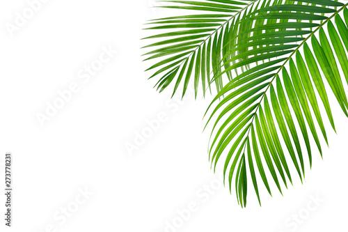 Foto op Aluminium Palm boom Green leaf of palm tree on blue background