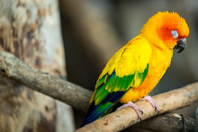 Small Parrot , Bird In Yellow/...