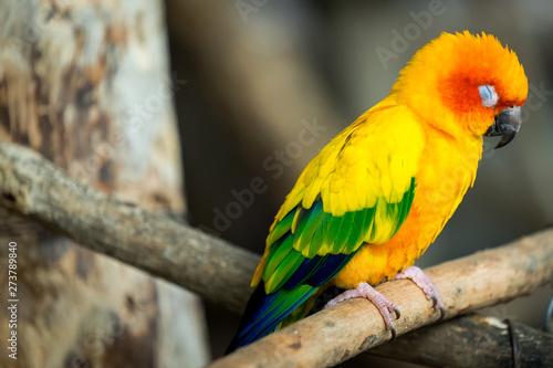 Small Parrot , Bird in yellow/orange/green colorful fur Wallpaper Mural