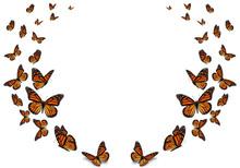 Beautiful Monarch Butterfly Is...