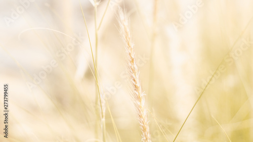 Poster Amsterdam vintage background wild grass flowers, nature beautiful, toning design spring nature, sun plants