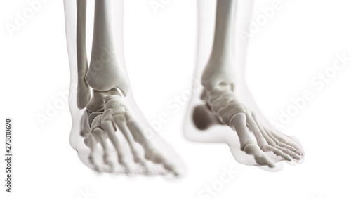 3d rendered medically accurate illustration of the foot bones Canvas Print