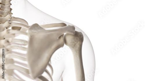 3d rendered medically accurate illustration of the shoulder joint Tapéta, Fotótapéta