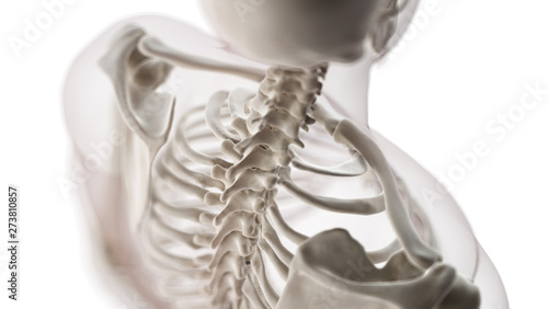 Photo  3d rendered medically accurate illustration of the cervical spiine