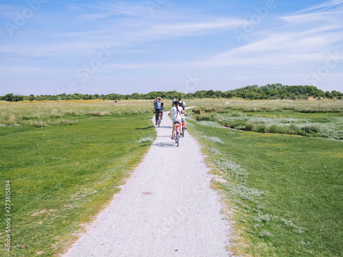 Fotografie, Obraz Back view cyclists family traveling on the road in the dune area of Schiermonnikoog island