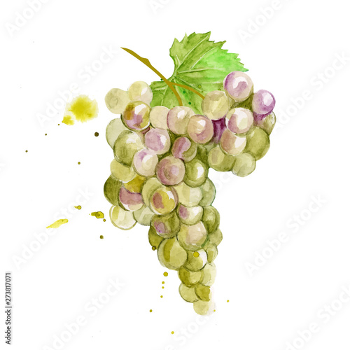 Colorful vector watercolor illustration of white green chardone grape with green leaves isolated on white background. Bunch of fresh grape. Fototapete