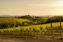 Tuscany Sunny Landscape. Typical For The Region Tuscan Farm House, Hills, Vineyard. Italy
