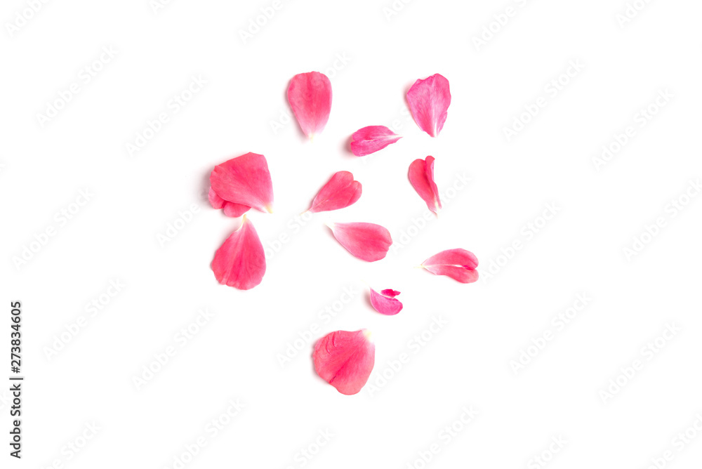 Fototapeta Pink rose petals isolated on white background.