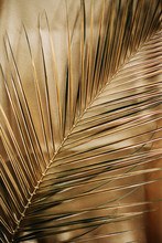 Golden Palm Leaf Pattern. Abstract Background.