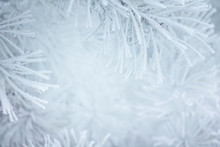 Winter Christmas Background With Snowy Pine Tree Branches.