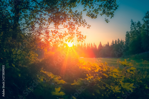 Wall Murals Northern Europe Summer night sunset view from Sotkamo, Finland.
