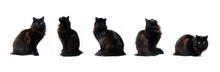 Composite Of Black Cat In Different Poses Isolated On White Background. Clipping Path, Different Variation Of Pet Poses