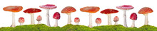 Fly Agarics Stripe  In Green M...