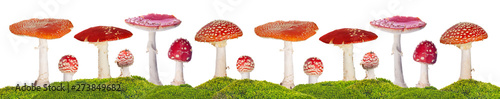 Foto fly agarics stripe  in green moss