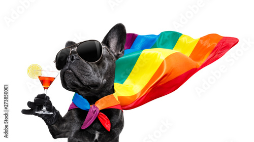 Canvas Prints Crazy dog gay pride dog
