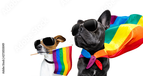 Canvas Prints Crazy dog gay pride dogs