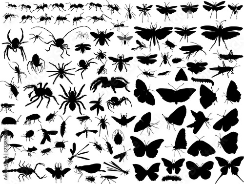 Photographie hundred insect silhouettes isolated on white