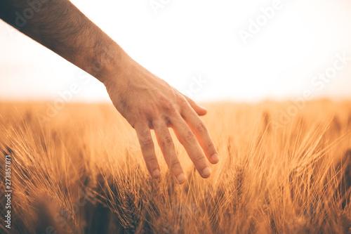 Valokuva  Mano che accarezza un campo di grano giallo immenso.