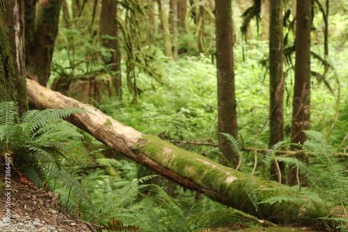 Fototapeten Wald Lower falls trail, Golden Ears Provincial Park BC Canada