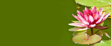 Image Of A Beautiful Lotus Flower On The Water