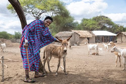 Photo maasai man and a baby donkey