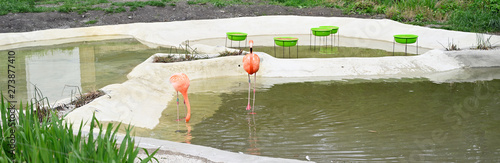 Adult bird flamingo in artificially created pond.
