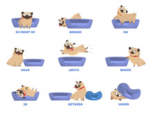 Pug Set. Learning Preposition ...