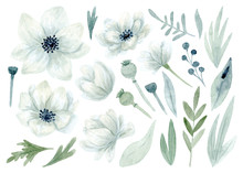 Collection Flowers Set. Hand Drawn Watercolor Poppy Flowered Anemone.