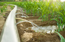 Flexible Irrigation Tubing System A Sunny Hot Day