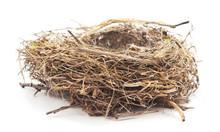 One Bird Nest.
