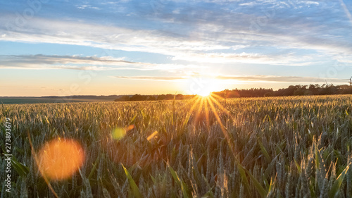 Foto op Aluminium Weide, Moeras Golden Evening Hour - Sunset Over A Cornfield