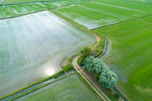 Flooded Fields For Rice Cultivation Seen From Above