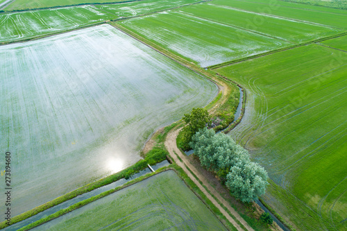 Fotografie, Obraz  Flooded fields for rice cultivation seen from above