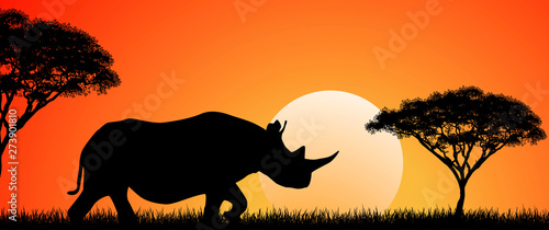 Wild African rhino at sunset  Silhouette of an African rhino