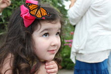 Young Girl With Butterfly On H...