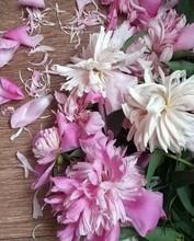 Pink Petals Of Beautiful Peony...