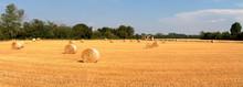 Balle Di Fieno In Un Campo Agricolo Di Frumento A Cusago In Italia, Bales Of Hay In An Agricultural Field Of Wheat In Cusago In Italy