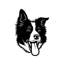 Border Collie Dog - Isolated Vector Illustration